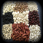 9 Varieties of Survival Beans Seeds.
